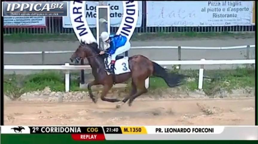 Palio di legnano, Contrada San Domenico: Il Cavallo Mitch, conquista la terza vittoria incarriera