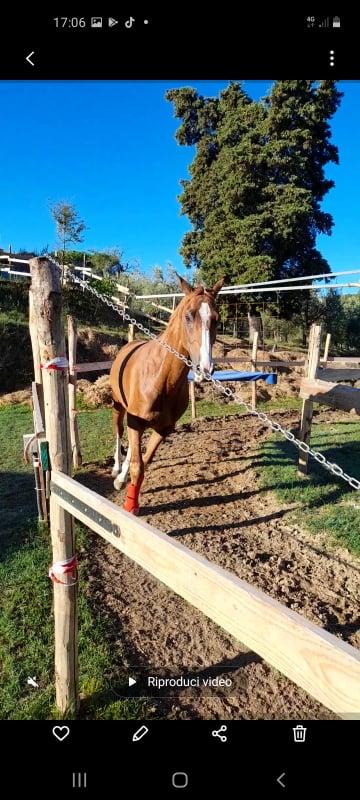 Palii: Il fantino Giacomo Lo Manto ha acquistato il cavallo ArmoniosuSauro