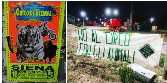 """Siena: """"No al circo con gli animali"""", Foresta che Avanza accoglie così il circo di Vienna ad Isola d'ArbiaDi"""