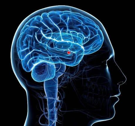 """Italia: Il cervello invecchia per """"colpa"""" di unamolecola"""