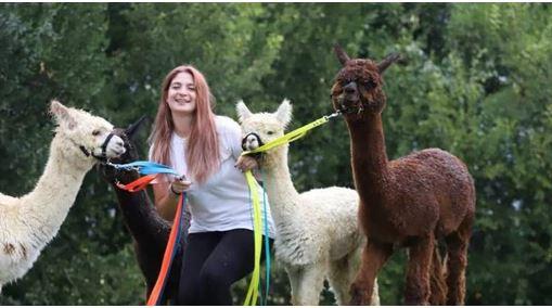 """Siena, Dalle Ande alla nostra città, Virginia Pernici: """"Vi racconto la mia vita con glialpaca"""""""