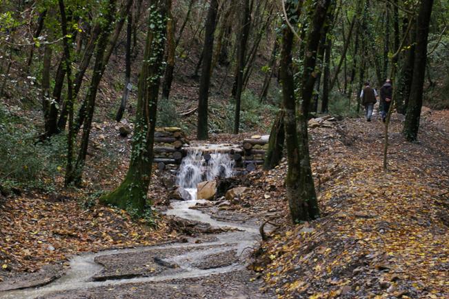 TOscana: Foreste, dalla Regione 6,5 milioni alle Unioni dei Comunimontani