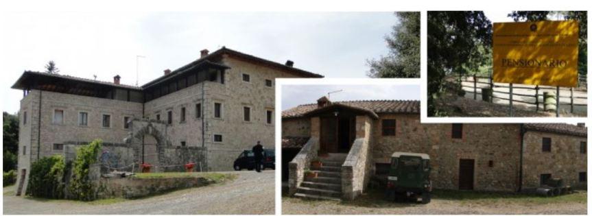 Palio di Siena, Dove i cavalli del Palio riposano: Ecco l'amore diSiena