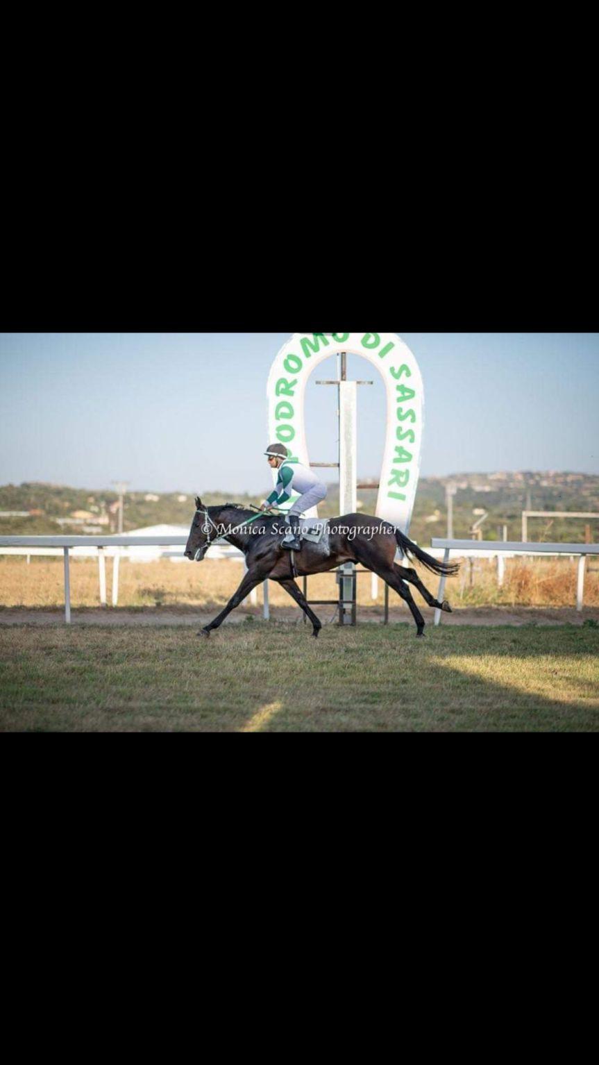 Ippica: E' stato acquistato il cavallo Assalto e portato alla Scuderia di VincenzoTurco