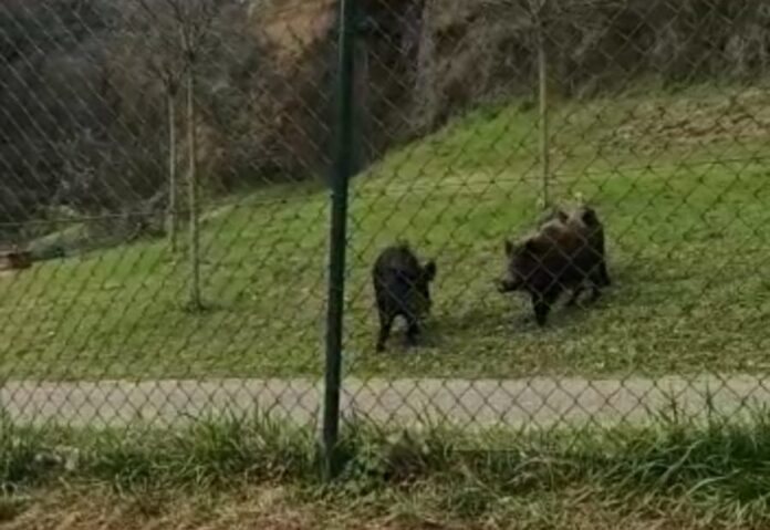 Toscana: Fauna selvatica, può continuare attività di controllo dellaRegione