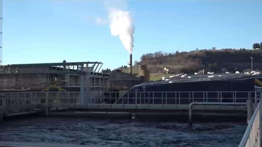 Toscana: Distilleria Deta, interrogazione di Migliorino (M5s) al ministroCingolani