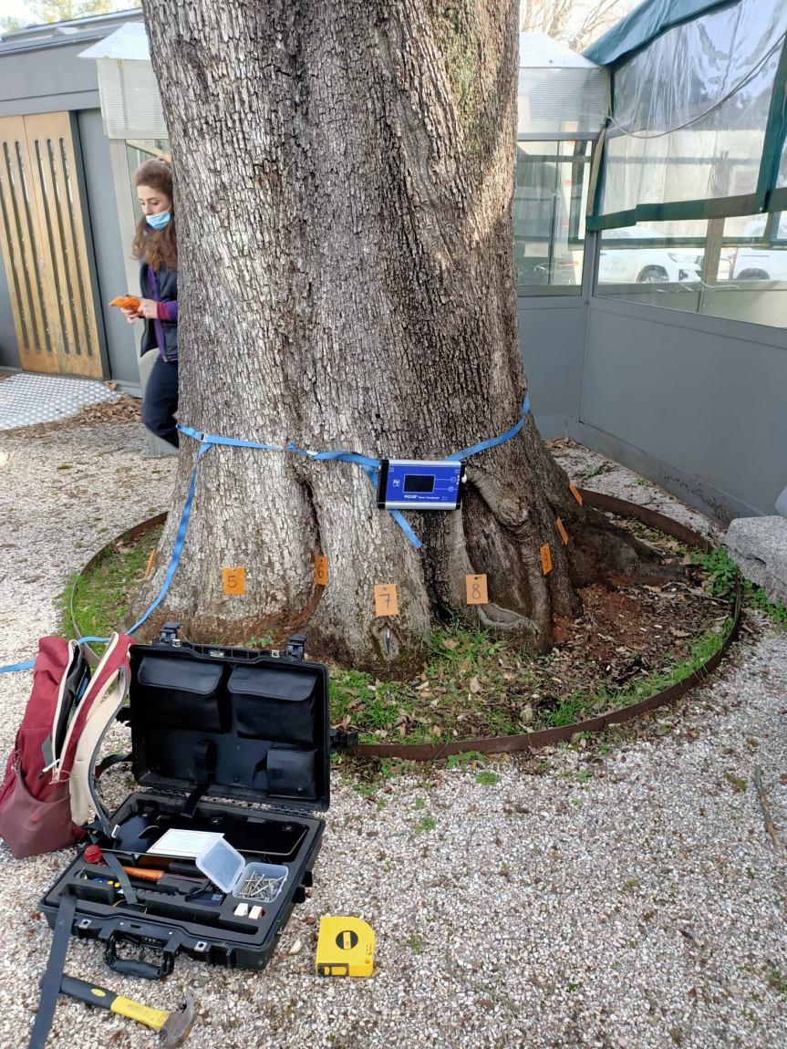 Siena: Oggi 22/02 Interventi di monitoraggio sui cedricittadini