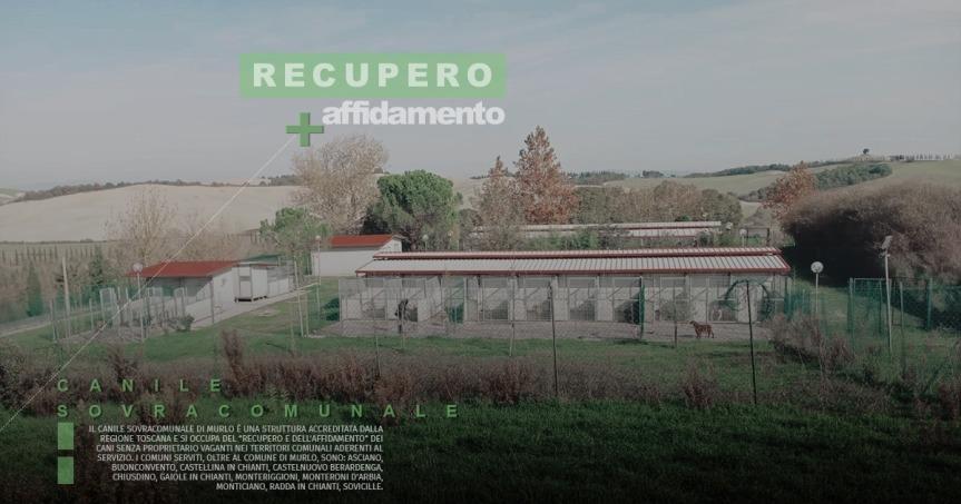 Provincia di Siena: Dodici cani trasferiti al canile di Murlo dal rifugio Enpa di Pistoia, la rabbia deivolontari