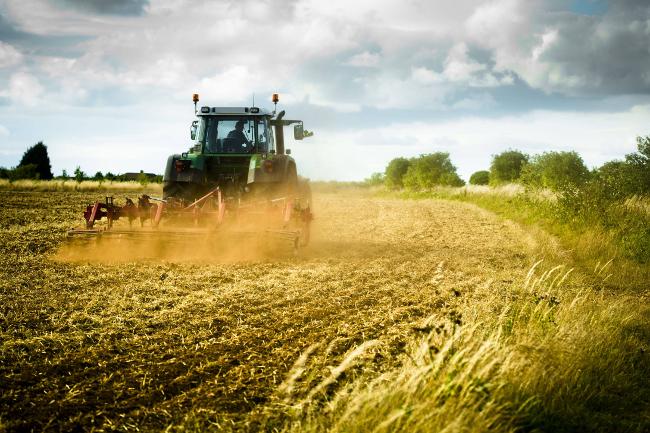 Toscana, Covid, imprese agricole: Scadono il 30 giugno termini per ottenere garanzie perliquidità