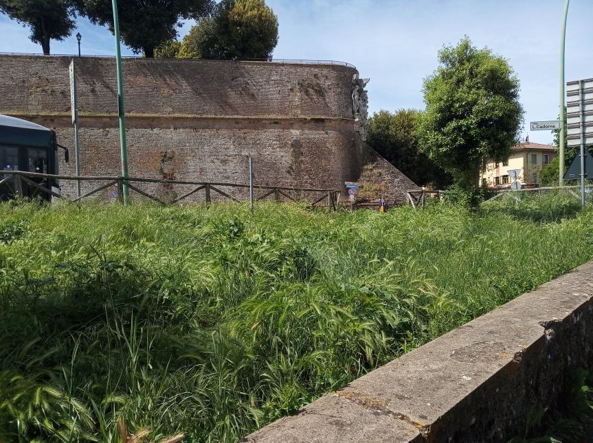 Siena: Oggi 18/05 segnalazione di erba molto alta in zona ViaDiaz