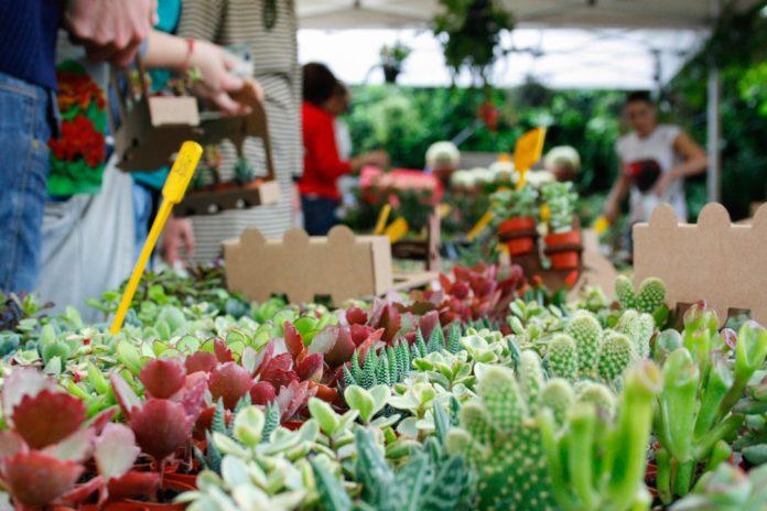Siena: Torna questo weekend la 'Mostra mercato di piante efiori'