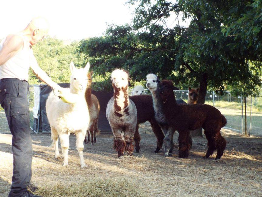 """Provincia di Siena, """"Casalbosco"""": Tra lumache e alpaca. I bimbisognano"""