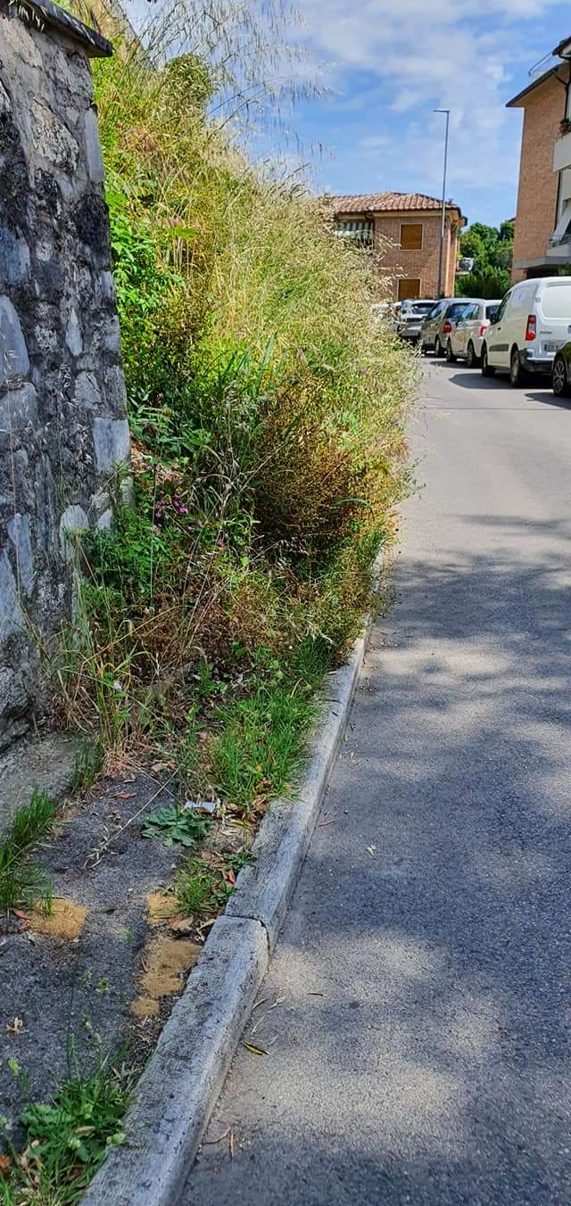 Siena: Oggi 06/06 Erba alta in Via Martiri diScalvaia