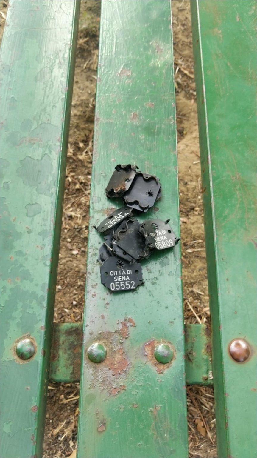 Siena: Oggi 30/06 rimosse le targhette dagli alberi al parco di ViaStrozzi