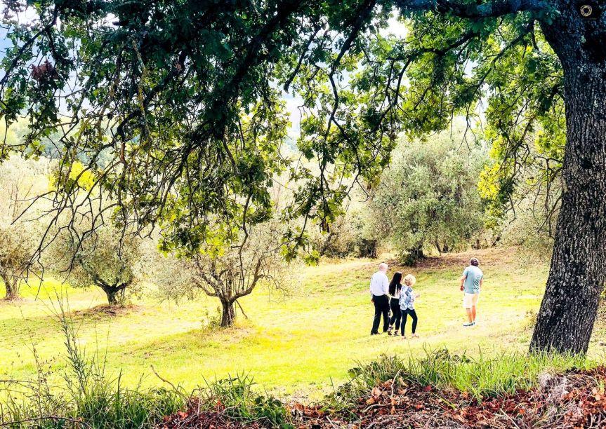 Provincia di Siena: Valdichiana, l'olio sempre più protagonista delturismo