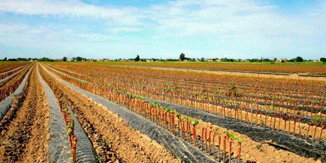 Toscana: Agricoltura, salgono a 100 milioni le risorse a favore delbiologico
