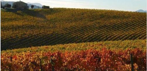 Toscana: Vino, il Chianti debutta a Londra con oltre 170etichette