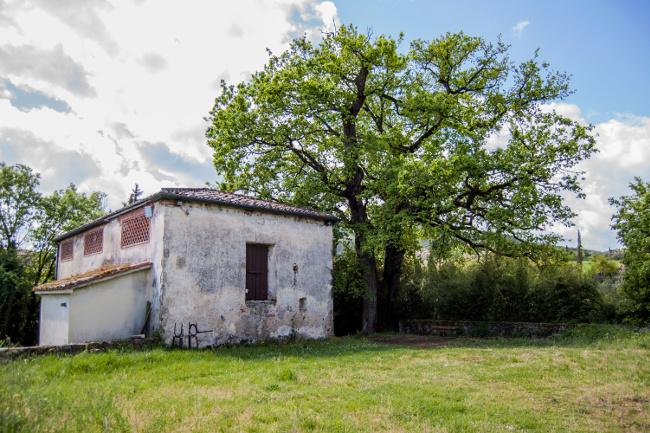 Provincia di Siena: Sovicille, riaperto al pubblico il Museo del Bosco diOrgia