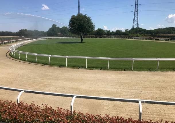 Palio di Legnano: I cavalli mezzosangue portano Legnano al centro dell'attenzione nazionale per le corse apelo