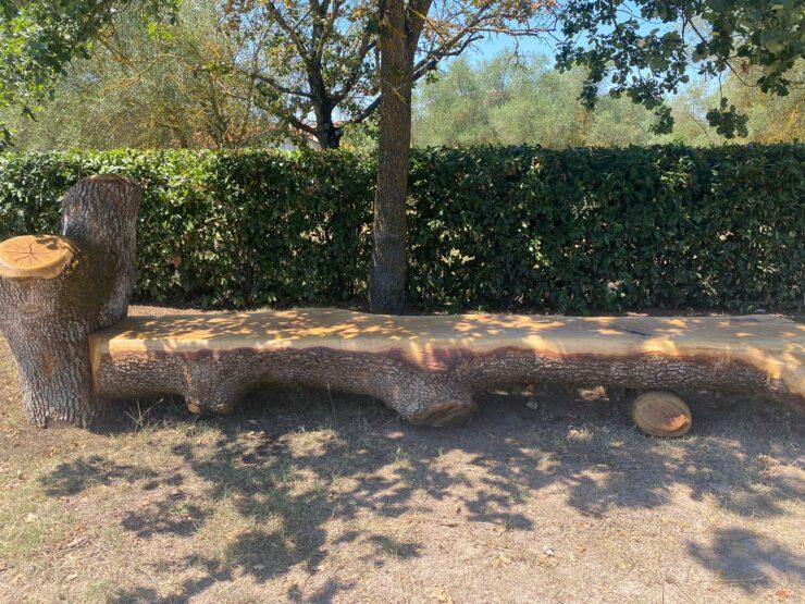 Provincia di Siena: A Rapolano l'albero caduto diventa unapanchina