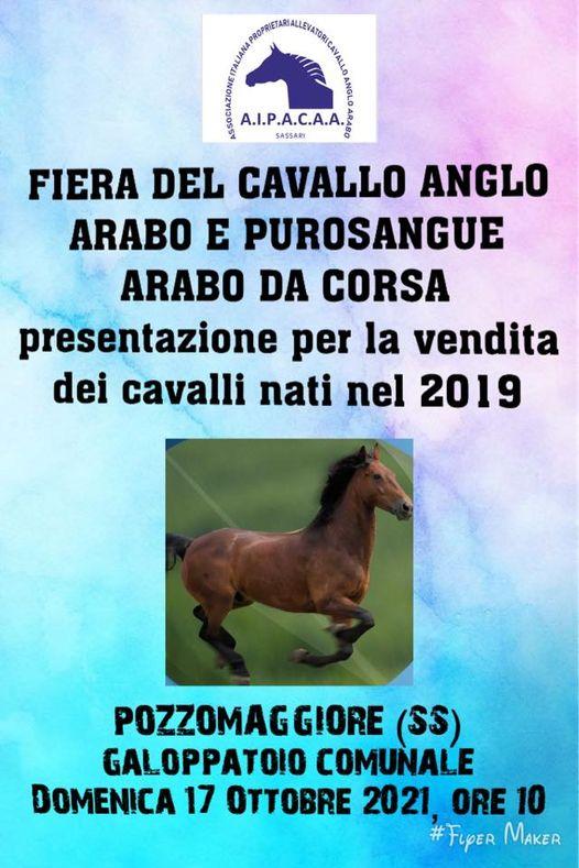 Ippica, Aipacaa: 17/10 Fiera del Cavallo Anglo-Arabo e Purosangue Arabo da Corsa e Pozzomaggiore ( SS)